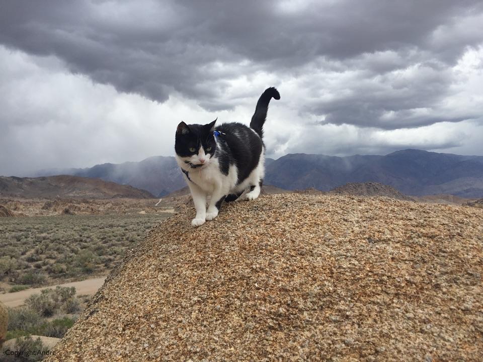 Kimo checking out the rocks.