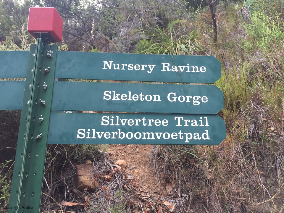 Up Nursery Ravine and down Skeleton Gorge.