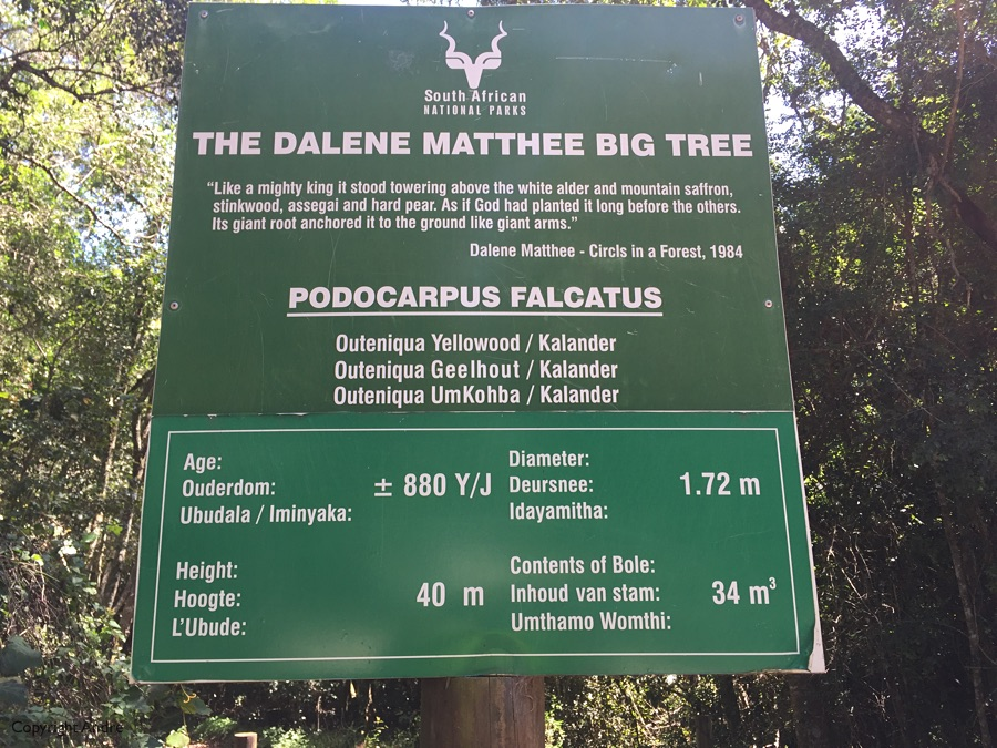 Big Tree documentation.