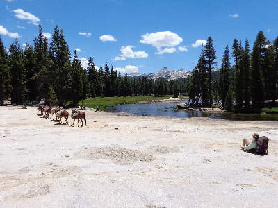 Tuolumne Meadows, Cathedral Peak and the Glen Aulin Pack Horses.