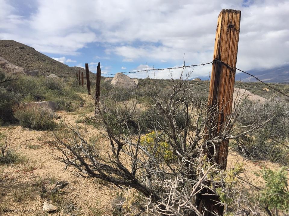 Old fence line.