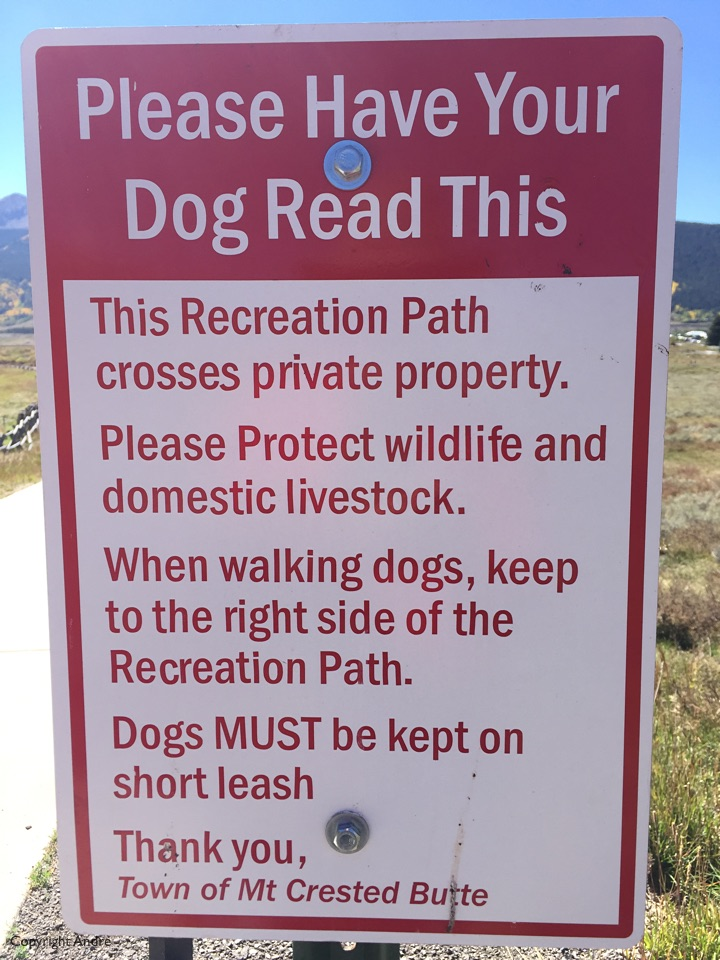 Dogs need to learn to read.