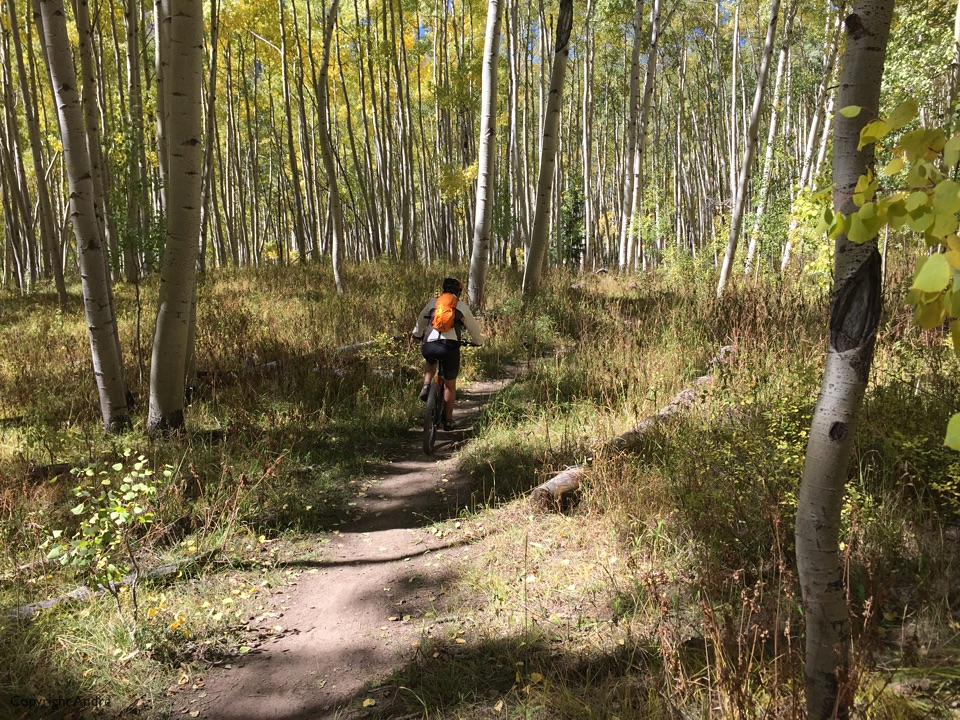 Down through the aspens.