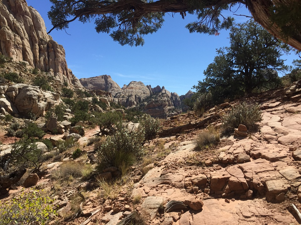 View on Throne trail.