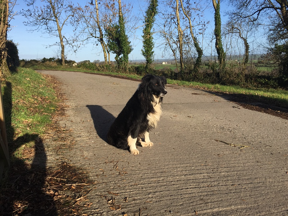 Bruce on guard duty to Rochestown.