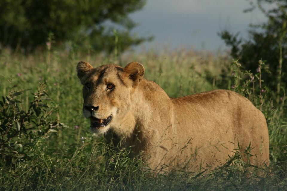 Female waiting to eat.