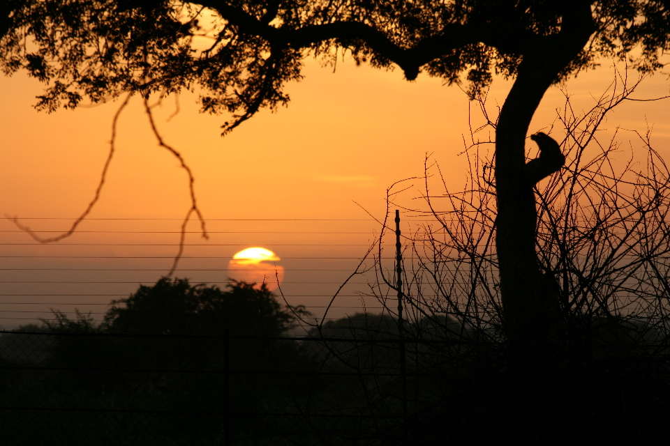 Sunrise at Satara camp.