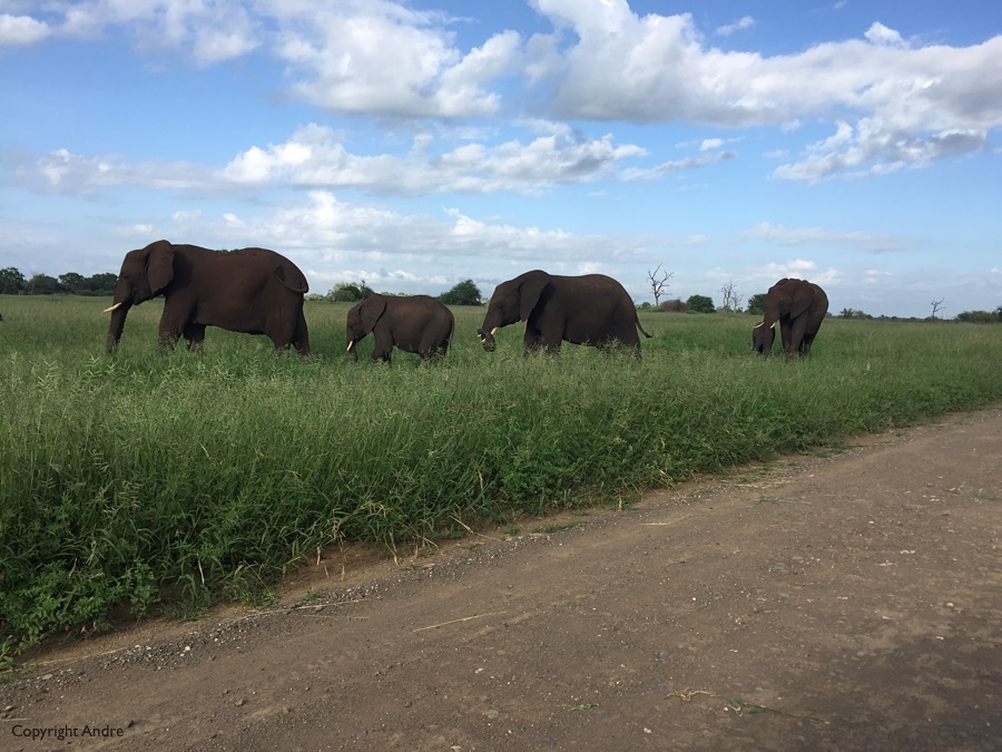 Like I said, plenty of elephants.